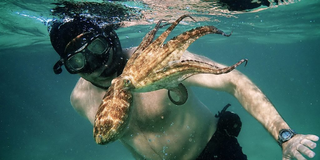 My Octopus Teacher Why Healing Means Returning to The Same Place Over & Over
